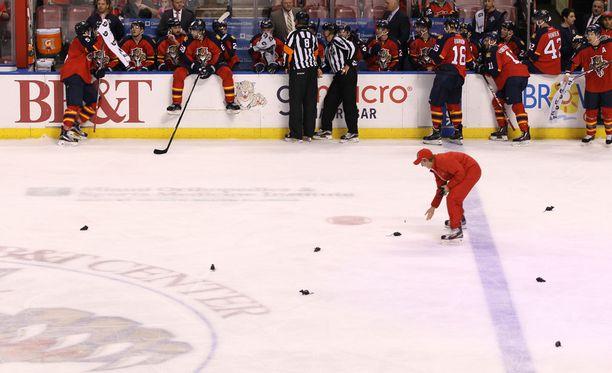 Rottainvaasio poiki Panthersille penaltteja.