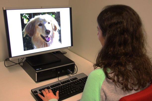 Koirien ilmeitä tunnistettiin tutkimuksissa tietokoneen ruudulta.