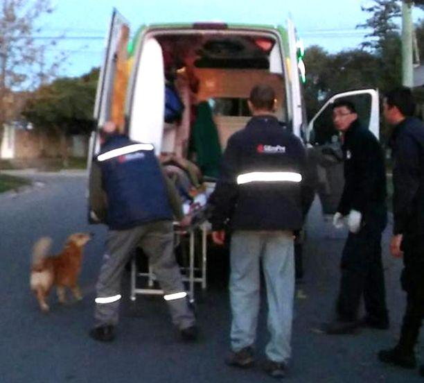 Tony-koira pyrki kyytiin myös ambulanssiin.