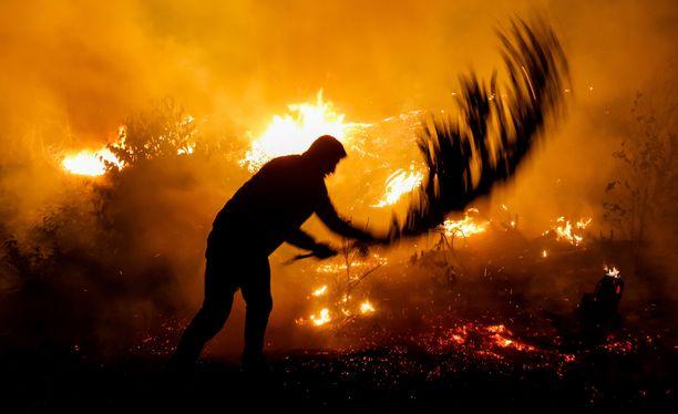Brasiliassa syttyi viime vuonna yli kaksi kertaa enemmän metsäpaloja kuin edellisenä vuonna.