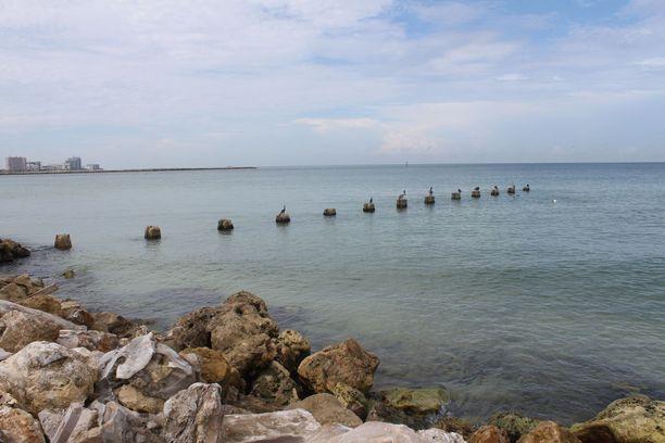 Monilla Floridan rannoilla on aavemainen tunnelma, sillä lahdelta puuttuu normaalisti vilkas veneliikenne ja rannoilta harrastuskalastajat. Pikkukaloja syövien pelikaanien on vaikea löytää ruokaa.