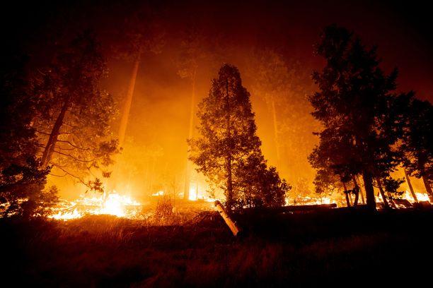 Metsäpalot ovat aiheuttaneet yli 175 000 ihmisen evakuoinnin.