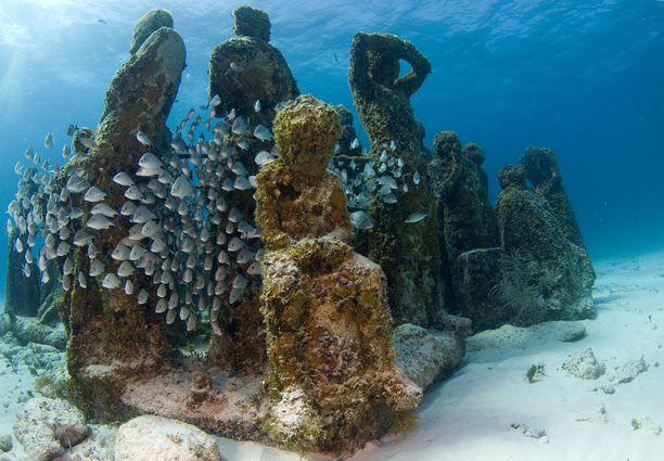 Museosta halutaan kasvattaa pikku hiljaa keinotekoinen koralliriutta.