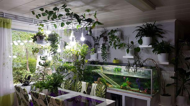 Elisa Mansikka-ahon perheen kodissa tarvitaan kekseliäitä keinoja kasvien sijoitteluun.