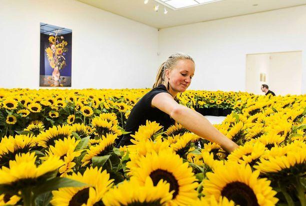 Auringonkukkia on myös esillä hollantilaisessa museossa, jossa ne kunnioittavat turman uhreja.