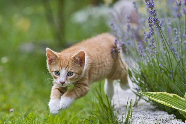 Nuoria miehiä syytetään satojen kissojen lahtaamisesta pienoiskiväärillä. Kuvituskuva.