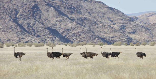 Namibiassa on mahdollisuus nähdä myös eksoottisia villieläimiä.