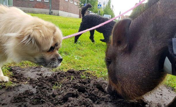 Mikä se tuo on? Koirat ovat usein hämillään Fernandista.