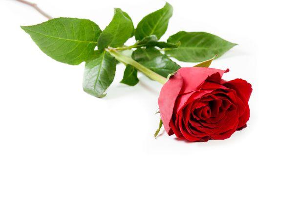 Kukat ovat perinteinen rippilahja.