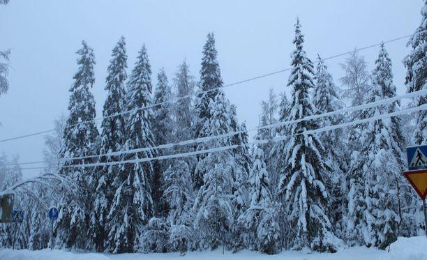 Tykkylumen painamat oksat ja puut ovat vahingoittaneet sähkölinjoja monin paikoin Pohjois-Karjalassa sekä Kainuussa.