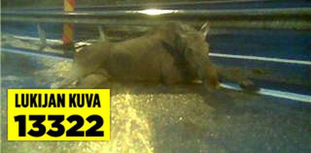 Suurikokoinen hirvi jäi onnettomuuden jälkeen hetkeksi makaamaan tielle.