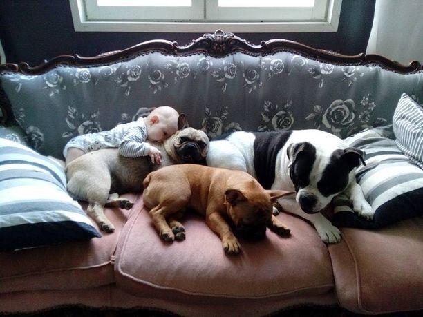 Perheen kuopus, kahdeksankuukautinen vauva, on erityisen hyvä kaveri koirien kanssa.