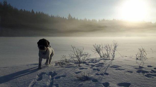 Saku temmellesi edestakaisin muutama sata metriä leveän lammen jäällä, kun yhtäkkiä jää petti sen alla.