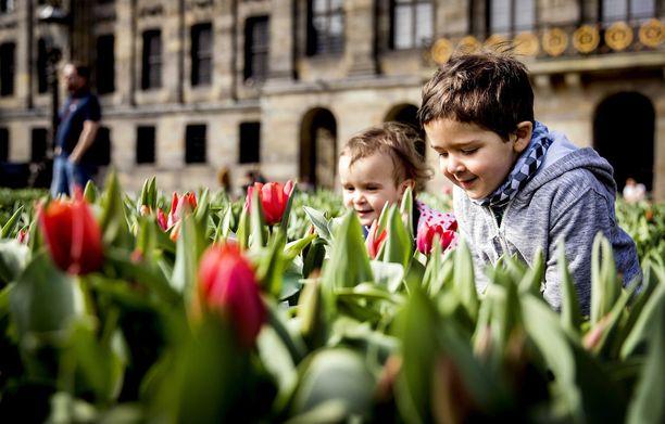 Tulppaanit näkyvät muuallakin Alankomaissa. Nämä kukat ja niiden pienet ihailijat on kuvattu Amsterdamissa.