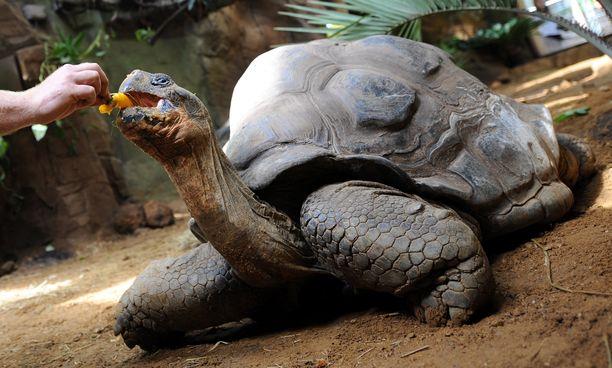 Eristyneillä Galápagossaarilla tavataan monia ainutlaatuisia eläimiä.