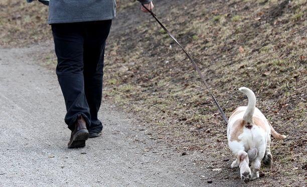 Koira söi lenkillä jotain, joka aiheutti sille myrkytysoireita. Kuvituskuva.