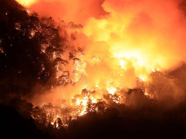 Turkin metsäpalot ovat vaatineet jo kuusi kuolonuhria.