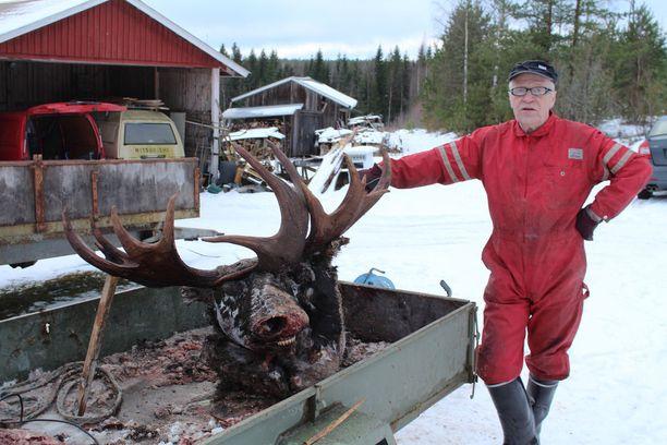 Matti Hölsä löysi suo-ojaan hukkuneet hirvet kotinsa lähtettyviltä.