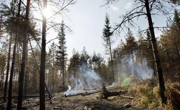 Metsäpalon riski voimistuu lähipäivien aikana. Kuvituskuva.