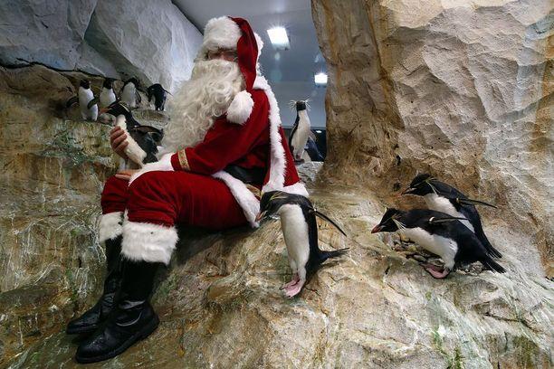 Ranskassa pukki piipahti eläinpuistoon ja kävi tervehtimässä pingviinejä.