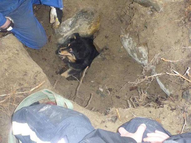 Palomiehet saivat pitkän aherruksen jälkeen kaivettua aukon, josta pilkisti koiran kuono.