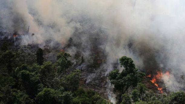 Brasilian sademetsät ovat vaarassa tulipalojen takia.