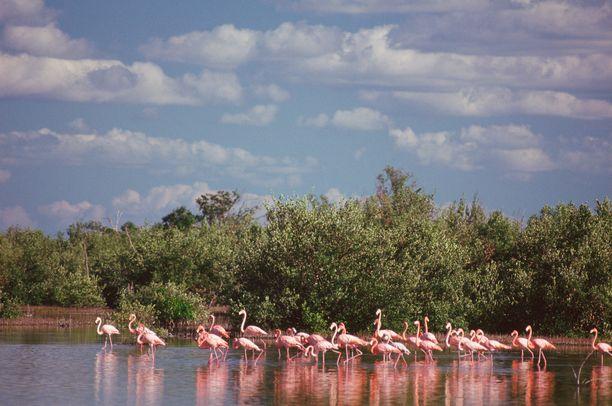 Cienaga de Zapatan alueella voi bongata esimerkiksi flamingoja.