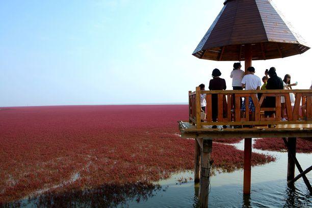 Punaista rantaa on sallittua ihailla vain sitä varten rakennetuilta laitureilta.