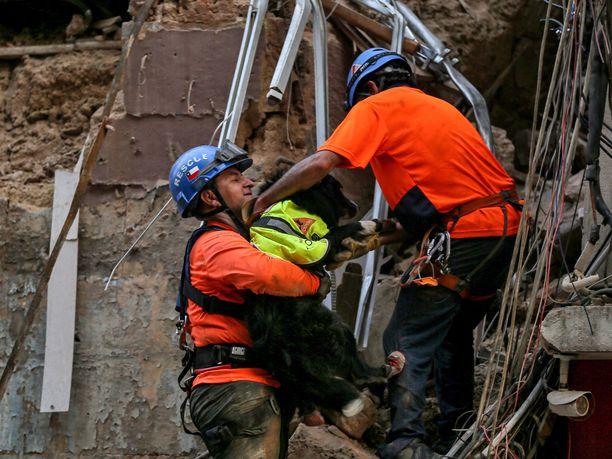 Chileläisen pelastusryhmän vainukoira havaitsi torstaina elonmerkkejä rakennuksesta, joka tuhoutui Beirutin kuukauden takaisessa räjähdyksessä.