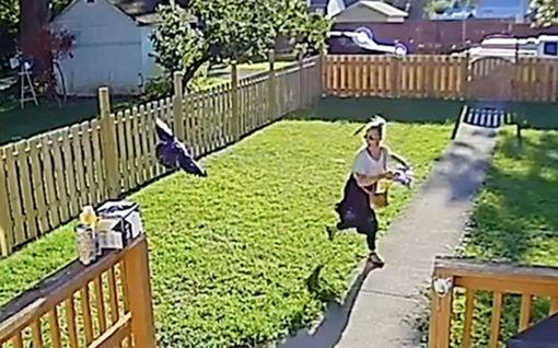 Varis piinaa pikkukylää USA:ssa - uusin hyökkäys tallentui valvontakameraan