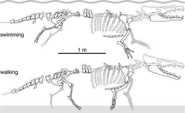 Fossiili oli hyvin säilynyt, noin neljän metrin mittainen.