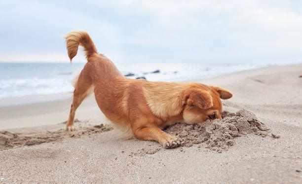 Jos juokset korvat hulmuten rannalla, olet rantakunnossa! Tämä on lemmikin suhtautuminen elämään ja siitä saisimme ottaa oppia me omistajatkin.