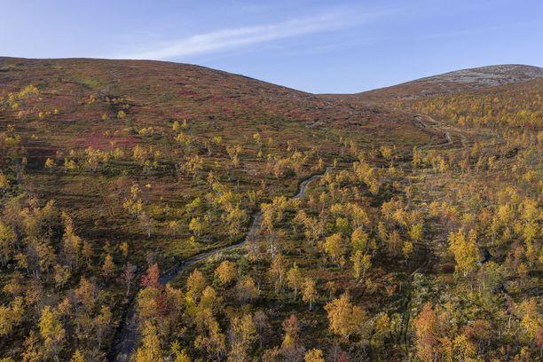 Kuva aiemmalta vuodelta ruskasta Pallastunturilla syyskuussa.