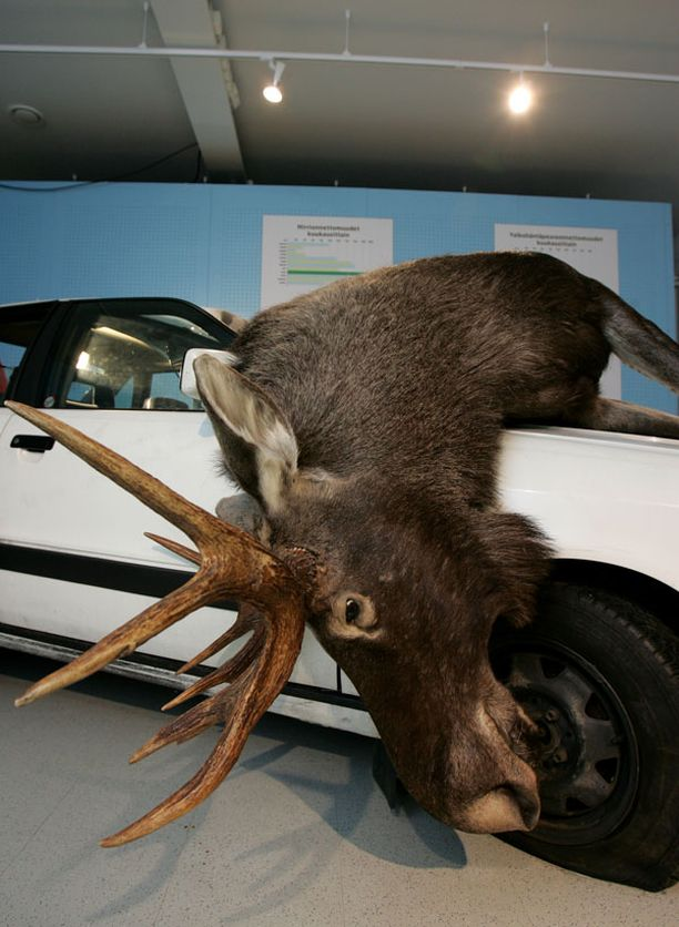 Hirvinauhasta on saatu positiivisia kokemuksia hirvikolareiden torjunnassa. Kuvassa simuloitu hirvikolari.