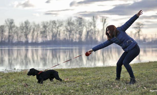 Vaikka koira ei olisi kiinnostunut pesivistä linnuista, suhtautuu lintu koiraan kuin petoon ja voi säikähtäessään kaikota pesimäpaikalta.
