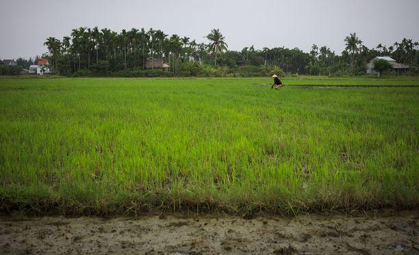 Riisinviljely on haavoittuvainen luonnonkatastrofien äärellä. Ilmastonmuutos vaikuttaa ihmisten elinkeinoihin ja ruokaturvaan.