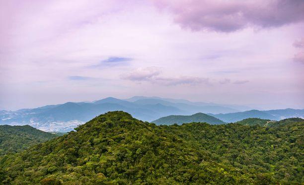 Jedek-kieltä puhuva heimo löytyi viidakosta vahingossa tutkijoiden työskennellessä toisen projektin parissa.