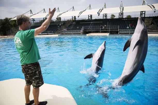 Särkänniemen delfiinit siirrettiin Kreikkaan Attica Parkiin elokuussa 2016. Vuosi siirron jälkeen Eevertti, Leevi ja Veera olivat delfinaarion johtajan Robert Gojcetan ohjauksessa.
