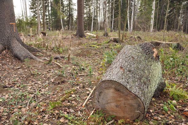 Malmin lentokentän pohjoispuolella sijainnut liito-oravametsä tuhottiin nopeasti. Joukossa oli runsaasti hyväkuntoisia puita.