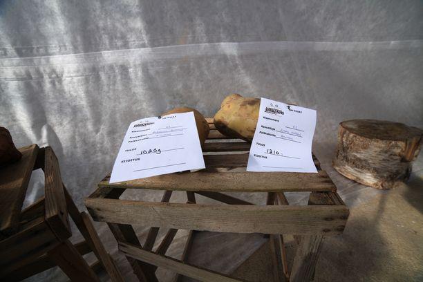 1,216 kilogrammaa painava peruna rikkoi Suomen ennätyksen.
