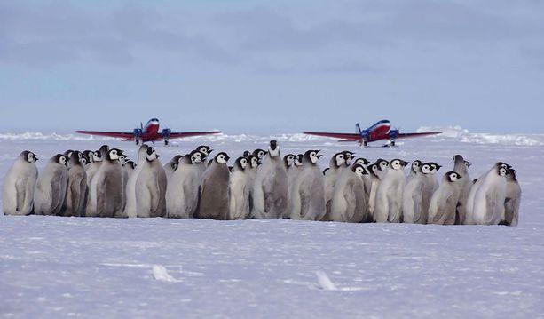 Vieraat saapuvat lentäen Etelä-Afrikasta.
