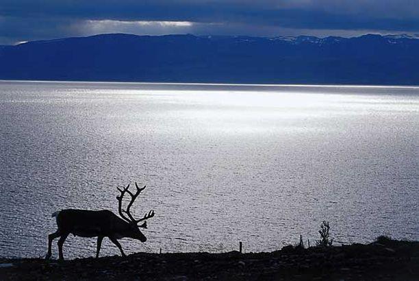 Pohjois-Norjassa hämmästeltiin spiraalimaista valoilmiötä.