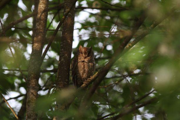 Lintu availi välillä silmiään illan valossa.