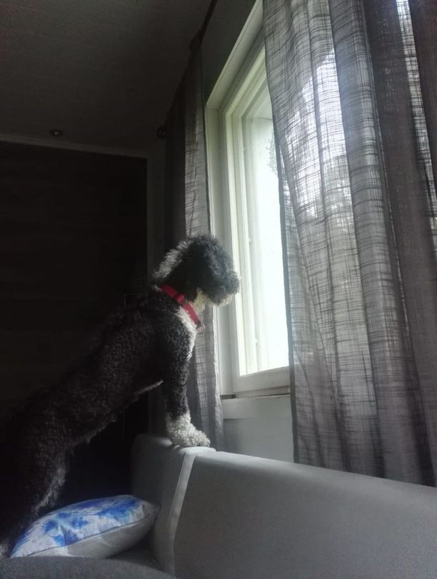 Lili-koira havaitsi tuhopolttajat ikkunasta.