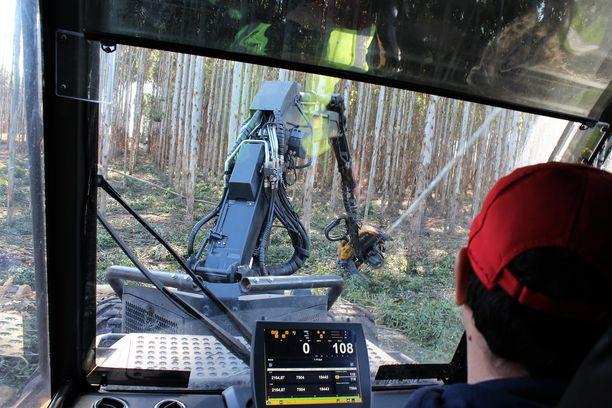 Traktorin ohjaamossa istuva työntekijä niittää eukalyptuspuita kuin heinänkorsia.