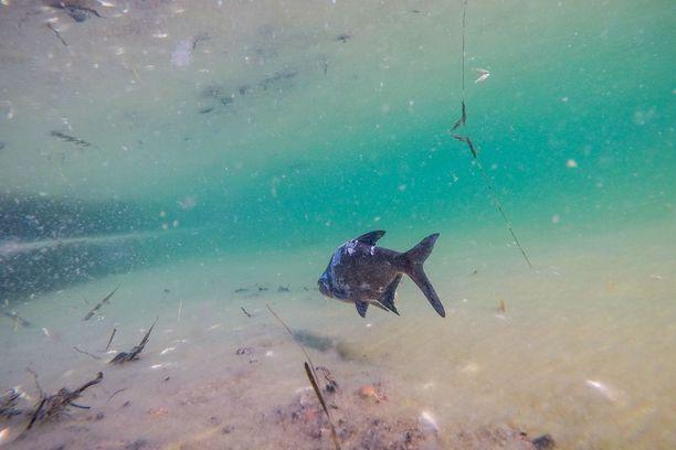 Kunnostuksen sivuvaikutukset huolestuttavat kokenutta kalastajaa.