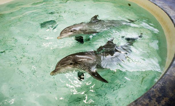 Long Play kertoo, että delfinaarion työntekijöiden mukaan delfiineille on aiheutunut ongelmia vankeudessa elämisestä.