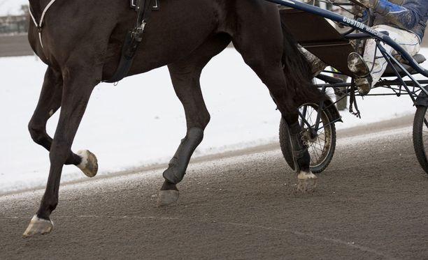 Ouluun raveihin matkalla ollut hevonen kuoli kuljetusauton kaatuessa.