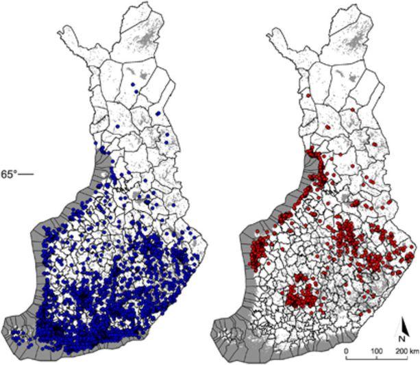 Kuvassa nähdään sinisellä puutiaisen levinneisyys kansalaisten lähettämien näytteiden perusteella ja punaisella taigapunkin eli Siperian puutiaisen levinneisyys samassa aineistossa.