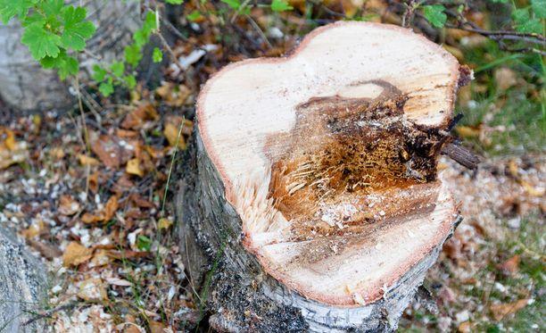 Nainen tuomittiin luvattomasta puiden kaadosta rivitalon pihalla. Kuvituskuva.